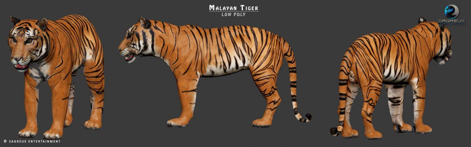 [Image: Malayan-Tiger-03_ZE.jpg]