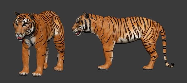3d-malayan-tiger_ze01a